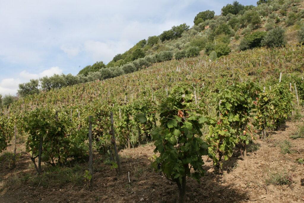 COLACINO WINES