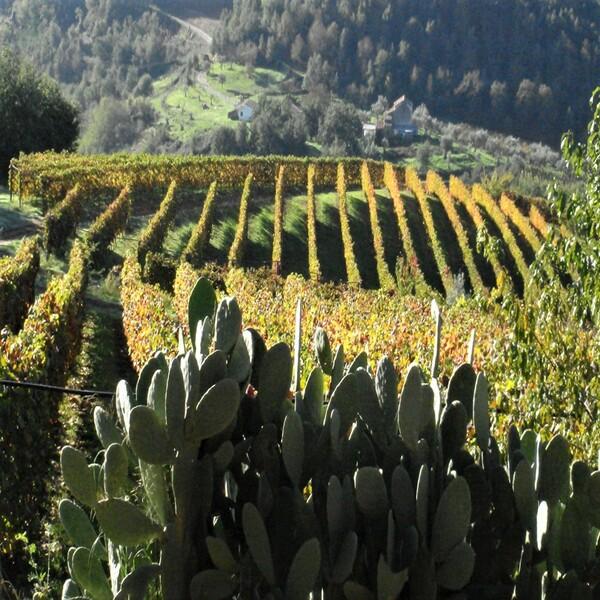 Rocca Brettia